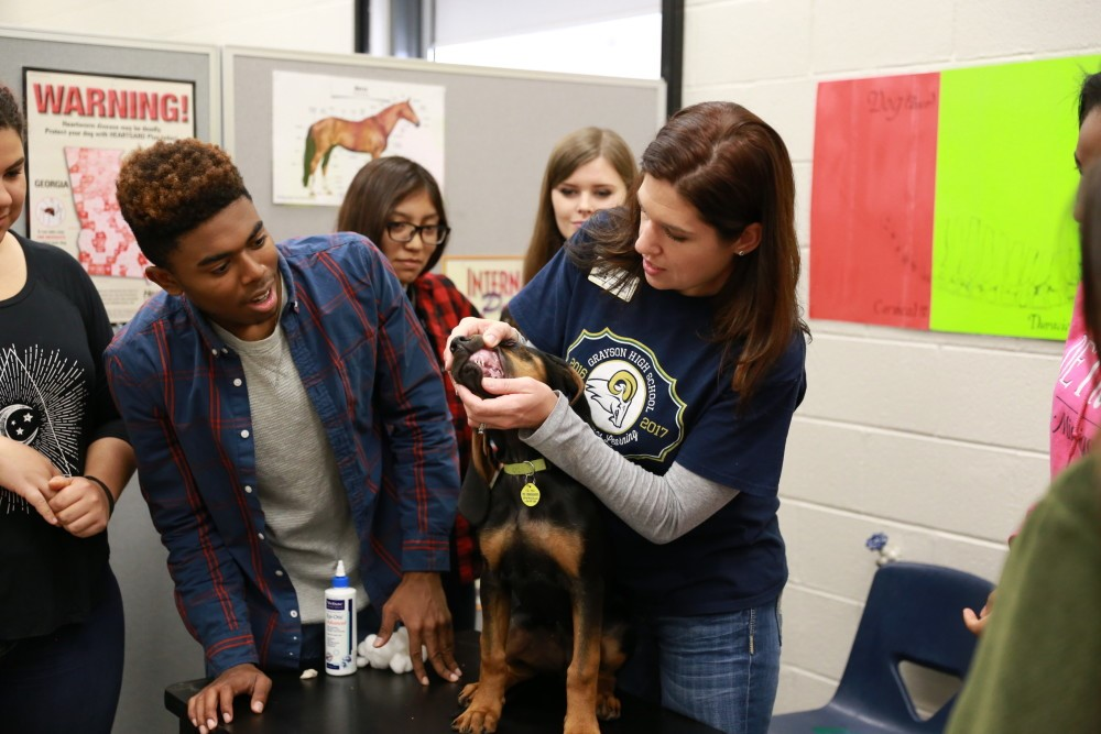 Mrs. Allen and students examining and cleaning a dog's teeth and gums